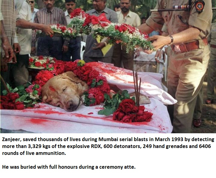 Good dog, Zanjeer